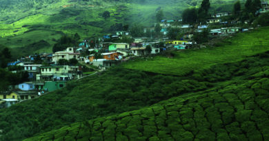 Travel Tips to The Tourists Visiting Kerala