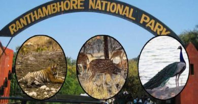 Best Time to Visit Ranthambore National Park