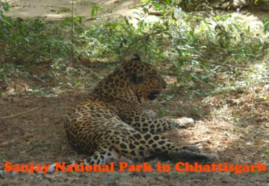 Sanjay National Park chhattisgarh